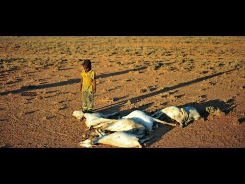 أخبار الصحة: الجفاف يجتاح إفريقيا.. وملايين يواجهون خطر المجاعة  - نشر قبل 6 ساعة