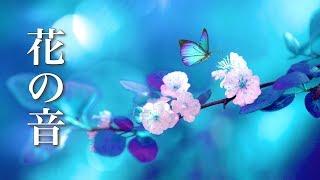 Small Flower Story [Healing BGM] Heartwarming Piano Music