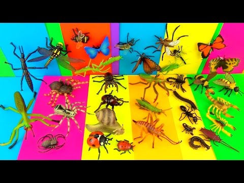 Learn Insects - Scary Bugs Creepy Spiders Kids toys - FUN Ending -Educational