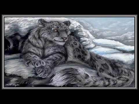 «Panthers And Leopards Irbis» слайд шоу из фото.