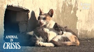 Cat Never Gives Up Her Disabled Child Who Can't Walk On The Rooftop | Animal in Crisis EP187