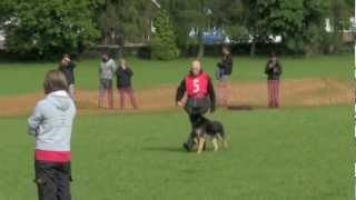 Team Gb Wusv Ipo World Championship Qualifier Vongalanberg Kai Obedience