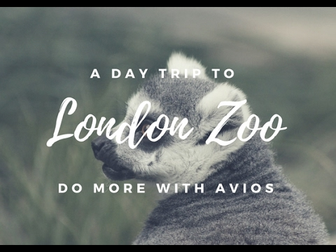 ZSL LONDON ZOO || DO MORE WITH AVIOS || SQUIBB VICIOUS