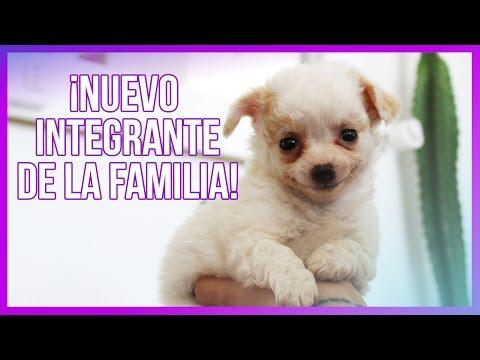 ¡LES PRESENTO A LA LUNITA! ♥ - Valentina Dávila