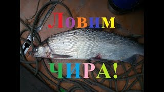 Ловим рыбу чир! Рыбалка в Якутии Yakutia!