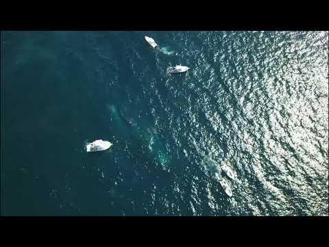 Scuttling of the Okinawa Tugboat in Pompano Florida - Mavic Pro Flight (4K)