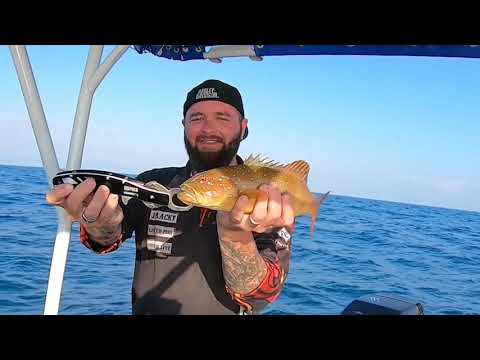 Coral Trout Fishing North Queensland - My First Time Spear Fishing!!!