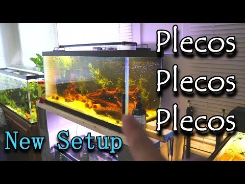 I Have To Do Something With All Of These PLECOS