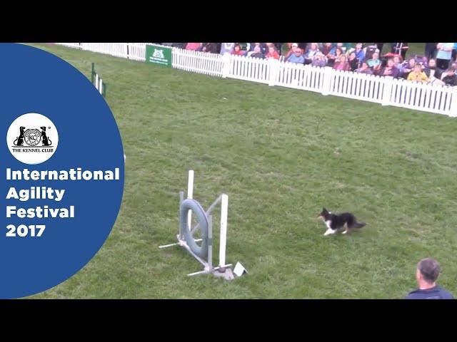 Championship Final - Small | International Agility Festival 2017