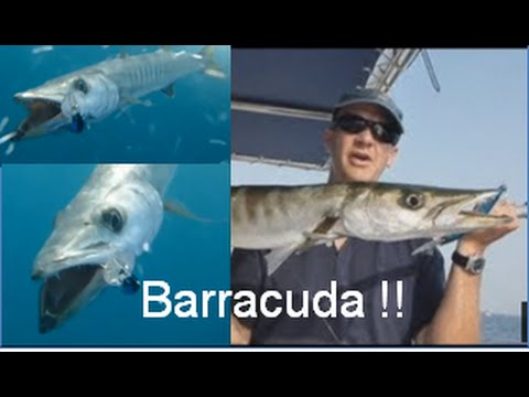 Fishing Adventures #84 - Barracuda Trolling with Lures and Live Bait in Abu Dhabi