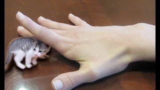 SMALLEST CAT IN THE WORLD! NANO KITTIES - SO CUTE!