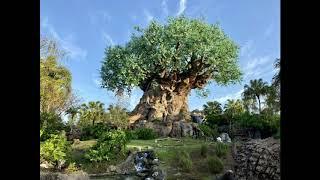 Animal Kingdom Tree of Life Area Music 3 Hour Loop