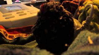 Magnetoterapia - kura domowa