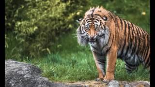 Редкие фото диких животных