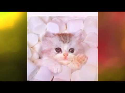 comedy kittens and puppies (short)