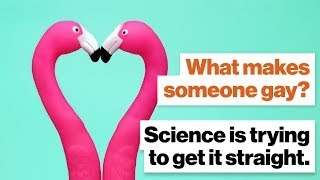 What makes someone gay? Science is trying to get it straight  Alice Dreger