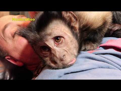 Monkey Whispering! FUN TIME!