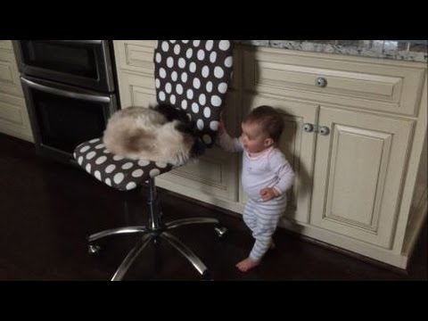 Ragdolls and Babies: The Adventures of Huck and Molly - Ragdoll Cat and Baby - Floppycats