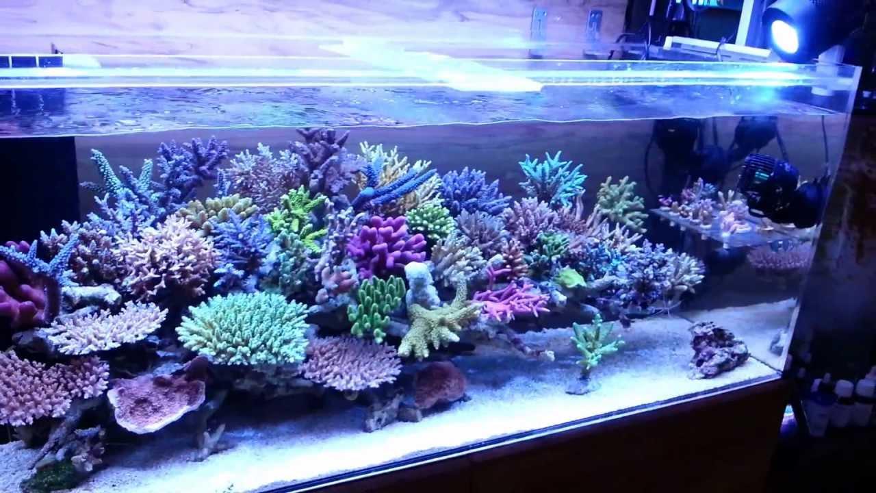 Korallen Zucht T5 Coral Light Amp Kessil A350 ~zeovit水槽