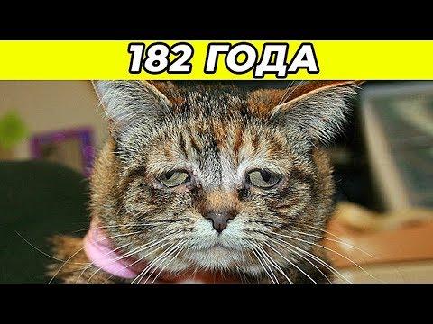 10 Самых Старых Котов в Мире