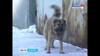 Вести-Хабаровск. Заседание по вопросу содержания безнадзорных животных