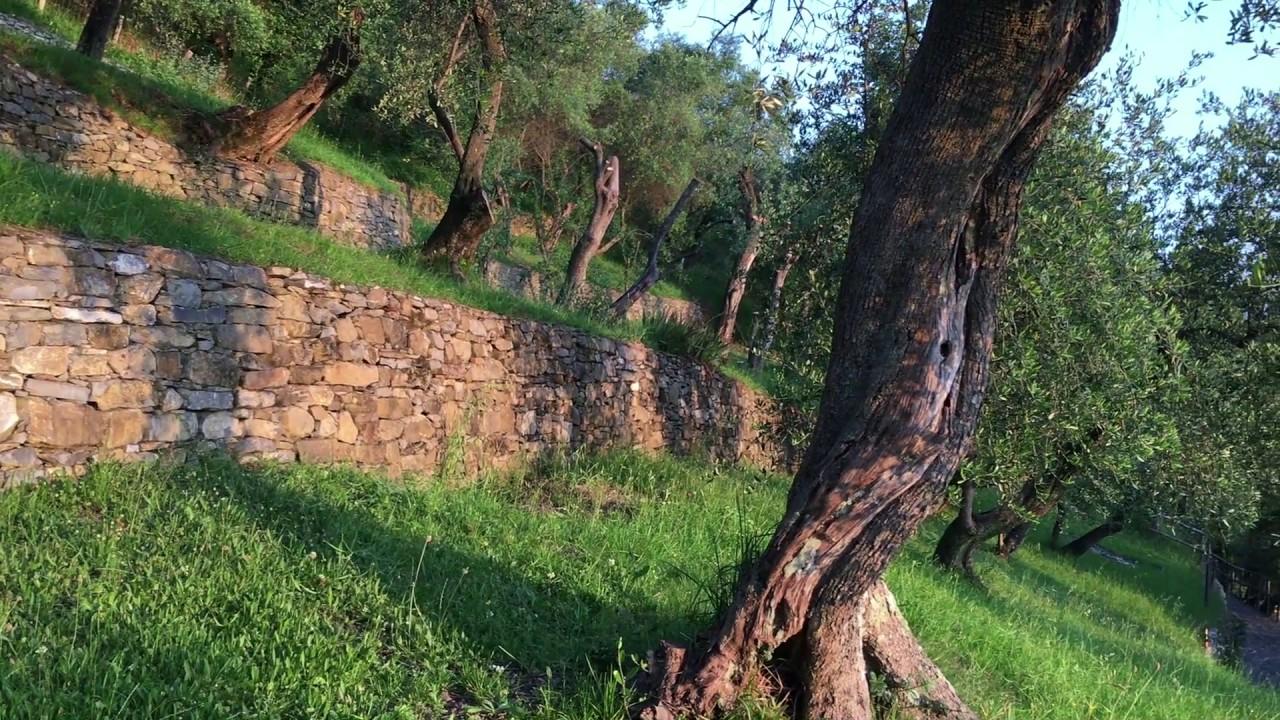 I terrazzamenti del paesaggio agricolo collinare del Monte di ...