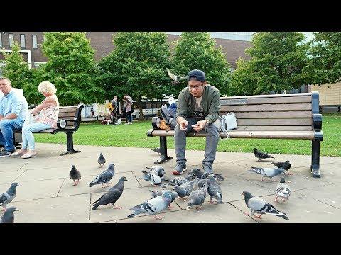 Ngasih Makan Burung di Newcastle UK