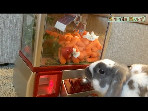 When your bunny is addicted to arcade games