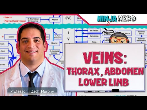 Circulatory System | Veins Of The Thorax, Abdomen & Lower Limbs | Flow Chart