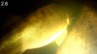 Подводная охота на Каме за март 2020