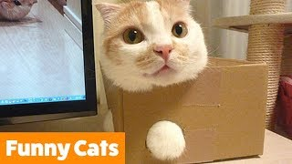 funny-cat-bloopers-and-reactions-funny-pet-videos