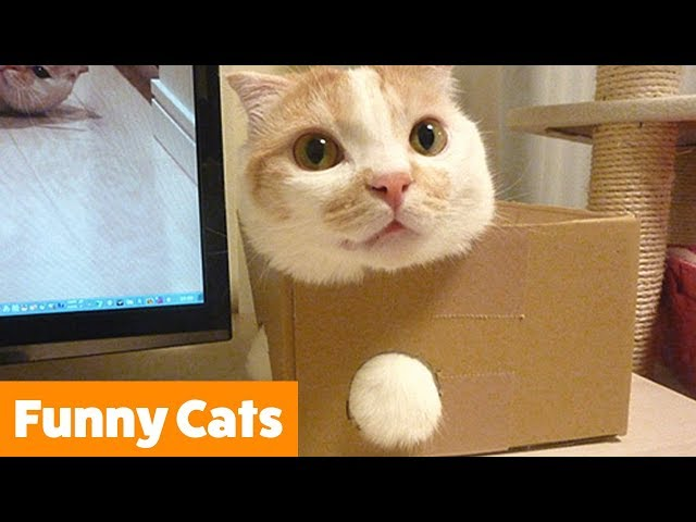Funny Cat Bloopers and Reactions | Funny Pet Videos