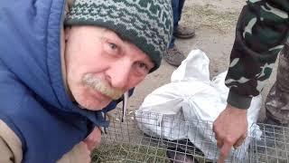 Купить кролика на рынке или на авито? Что есть в продаже. Покрытие крольчихи в багажнике