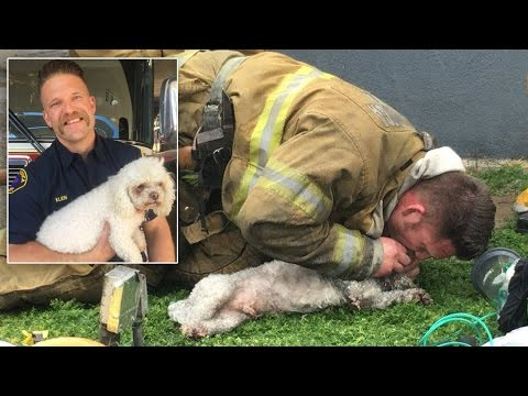 Thumbnail: Dog Owner Thankful That Firefighter Gave Life-Saving CPR: I Thought He Was Dead