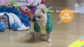 Скачать ENG SUB The Man Who Feeds The Dog 2 Lovelyz Ep 5