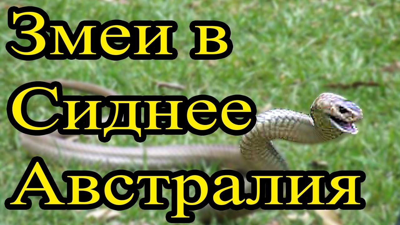 Самые ядовитые змеи. Змеи Австралии - YouTube