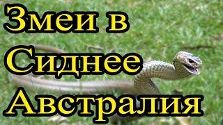 Самые ядовитые змеи. Змеи Австралии