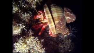 Stravaganti creature sottomarine - Strange underwater creatures