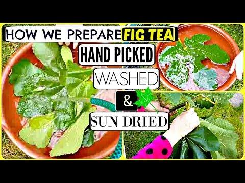 how-we-prepare-organic-moroccan-fig-tea..-detox-health-benefit-tea.-hand-picked-washed-&-sun-dried