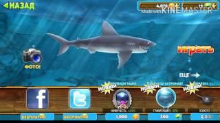 hungry shark как заработать деньги