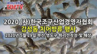 2020 (사)한국조구산업경영자협회 감성돔 치어 방류 …