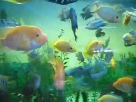 pecera 1600 litros 260x80x80 peces grandes ciclidos 091210
