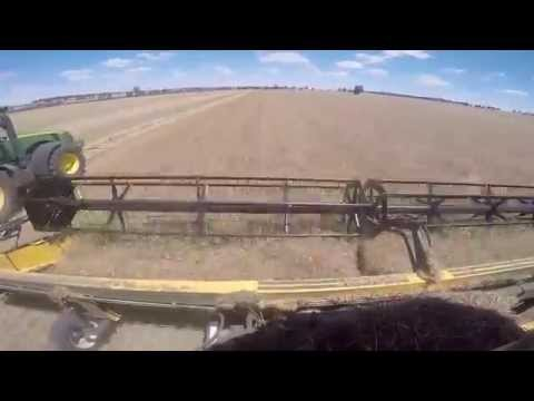 Palm Springs Farms Wagin WA Harvest 2014