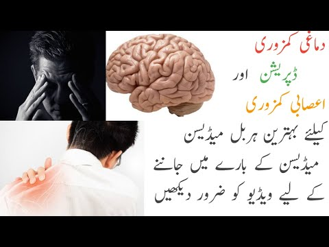 Treatment of brain weakness, depression and nerve weakness with herbal medicine