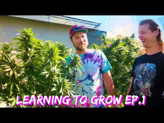 Growing Weed Tips: Learning To Grow Marijuana Ep.1