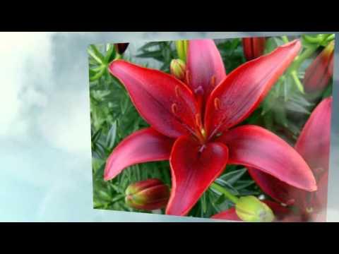 Дети-наши цветы стихи про детей