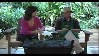 Blake's Tips & Tricks: Strawberries