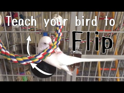 Bird Trick Tutorial   Flip On Cue