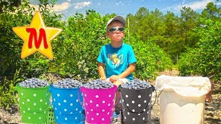 Max having fun at Blueberry Farm For Kids IRL Vlog