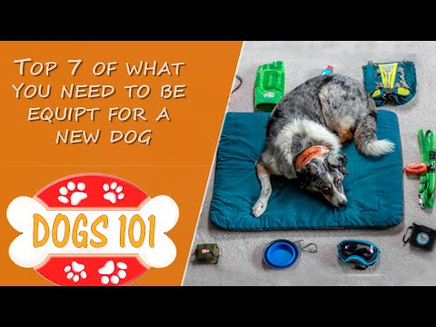 Top 7 of What You Need to be Equipt for a New Dog
